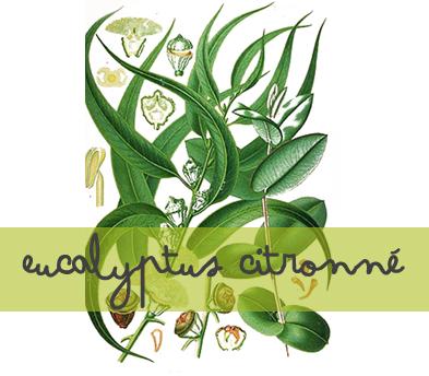 soin-huile-essentielle_eucalyptus