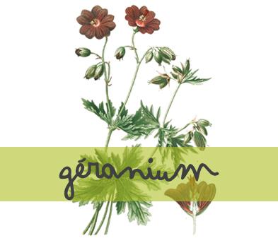 soin-huile-essentielle_geranium