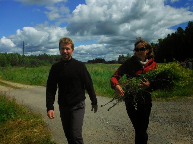 Récolte de fleurs pour Ligo