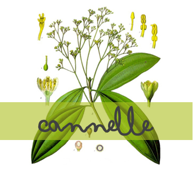 soin-huile-essentielle_cannelle2