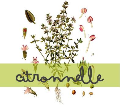 soin-huile-essentielle_citronnelle