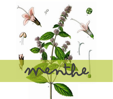 soin-huile-essentielle_menthe