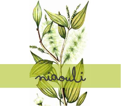 soin-huile-essentielle_niaouli