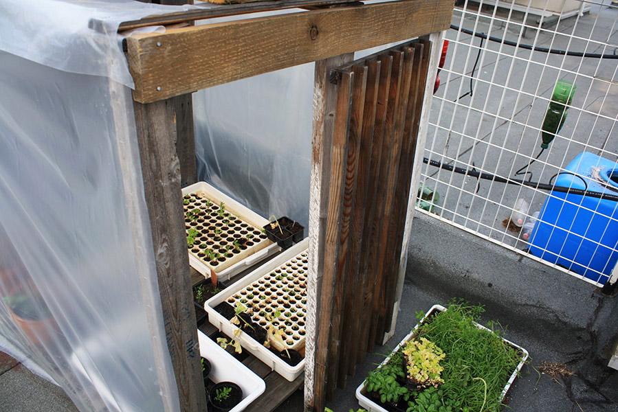 Biodiverticity, potager urbain sur les toits