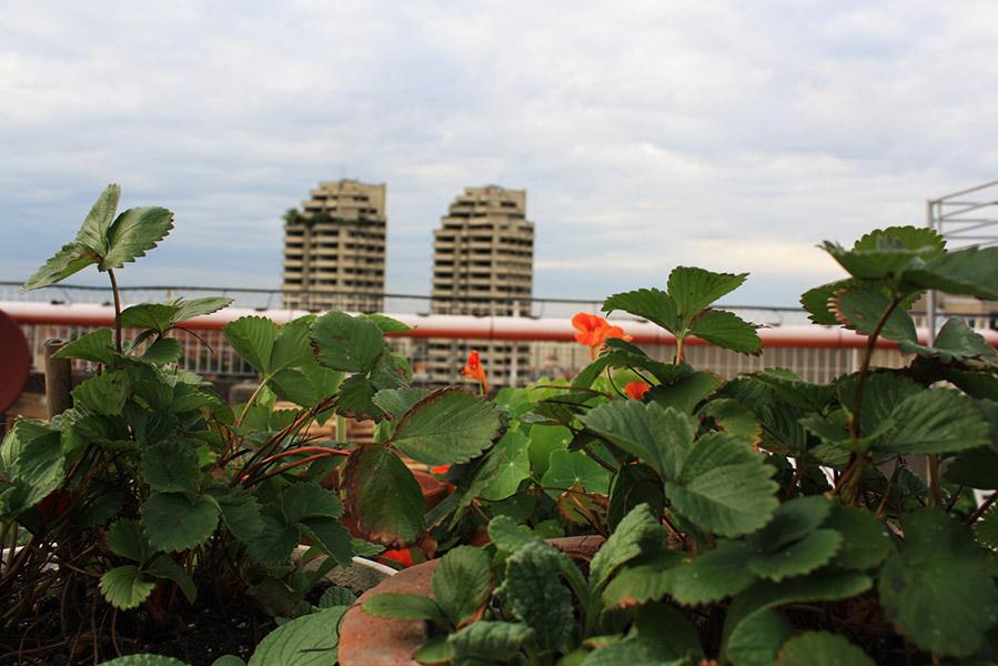 Jardins communautaires urbains