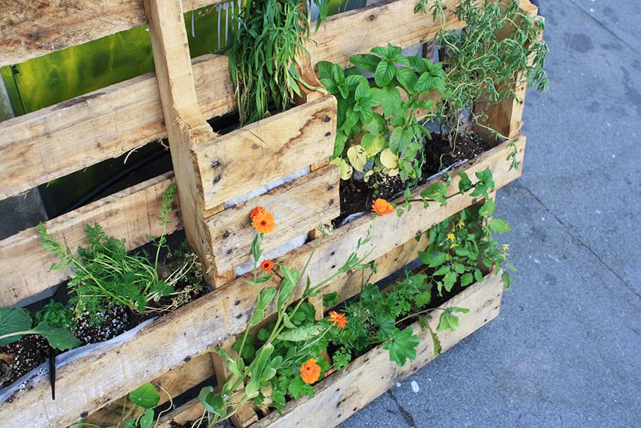 Biodivercity, agriculture urbaine