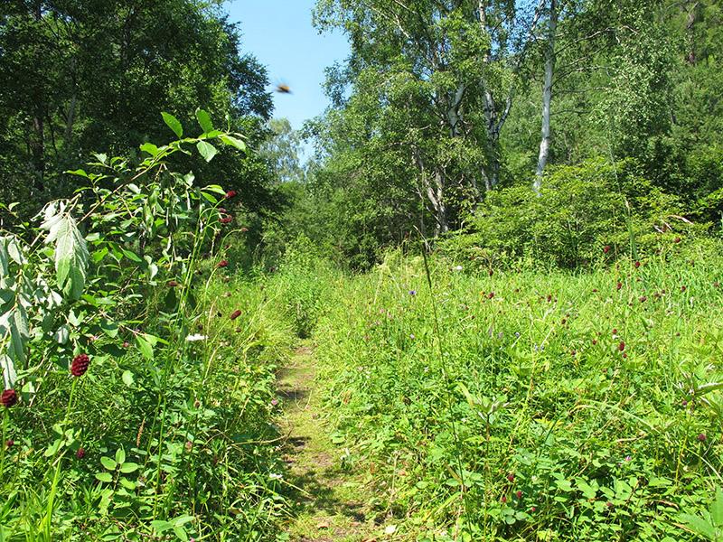 great_baikal_trail (6)