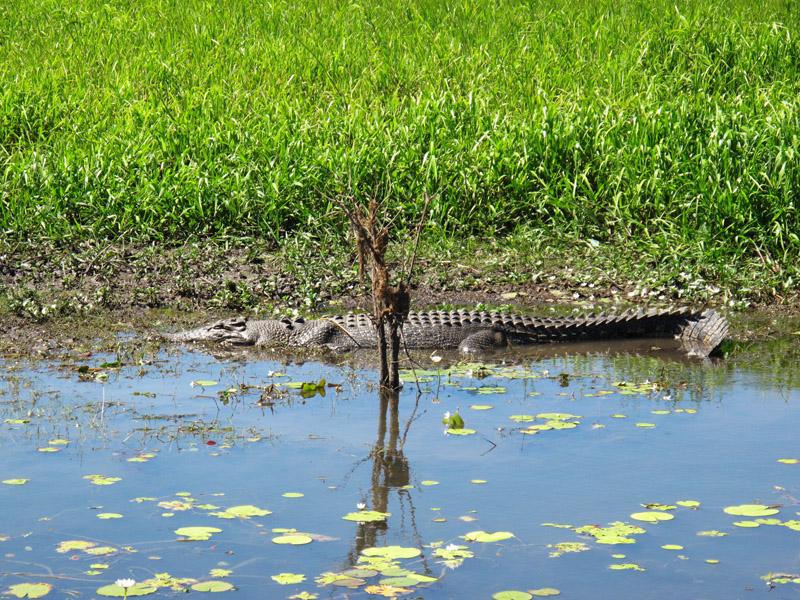 Kakadu, crocodile d'Australie