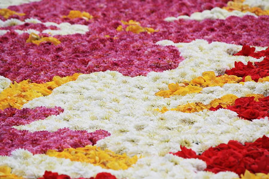Magnolia du tapis de fleur