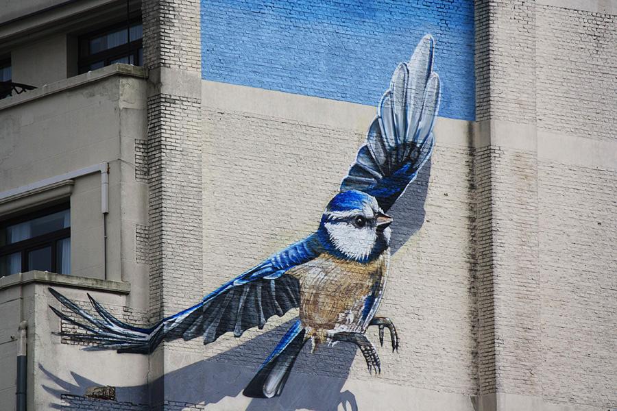 Street-art oiseau
