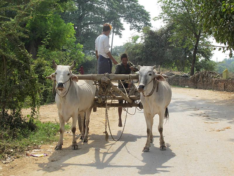 Birmanie_Mandalay_Amarapura_Inwa_Sagaing (14)
