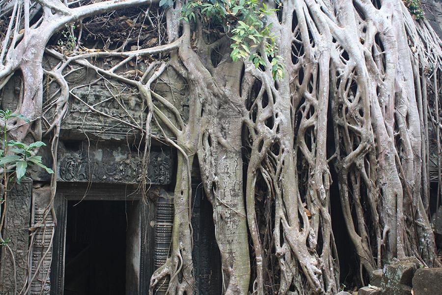 cambodge_TatPhrom (15)