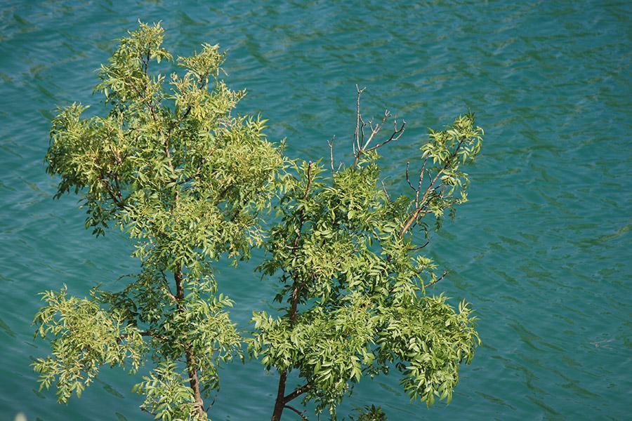 Lac du parc Krka, Plitvice