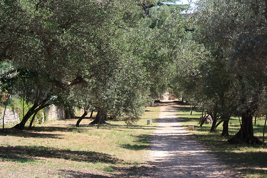 Jardin botanique de Lokrum
