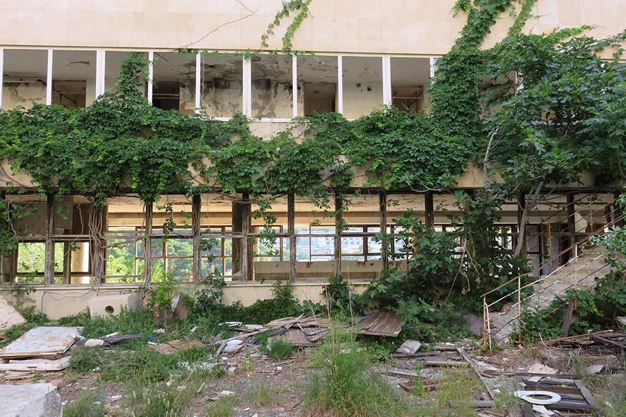 Vegetation dans hotel abandonné