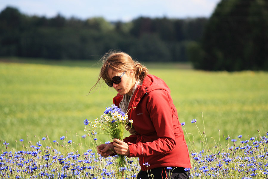 Tatiana ramasse les fleurs pour sa couronne de Ligo