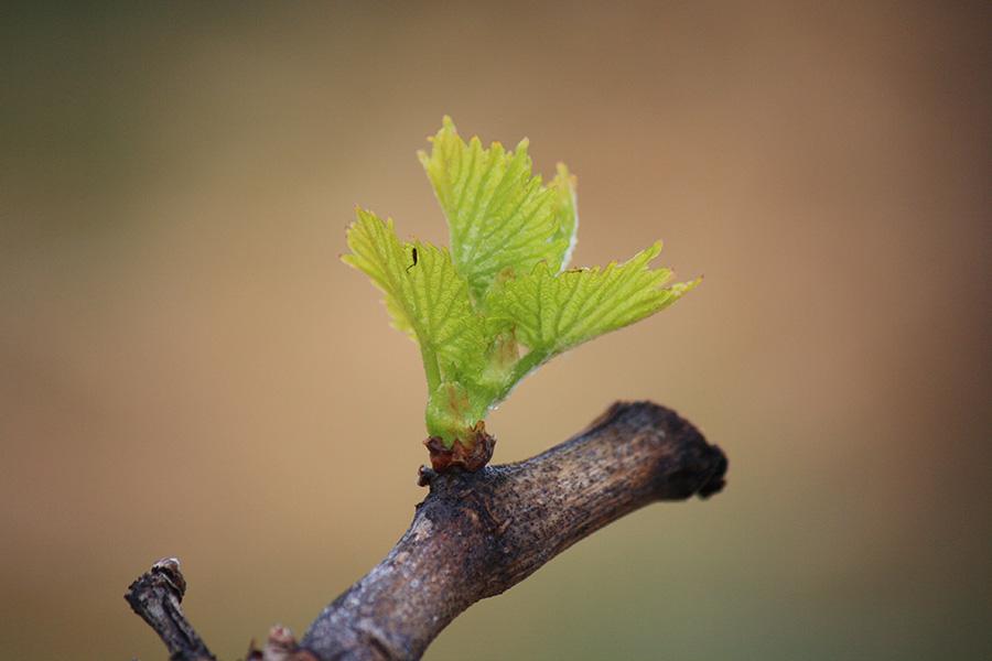 Vignobles de chateauneuf-du-pape