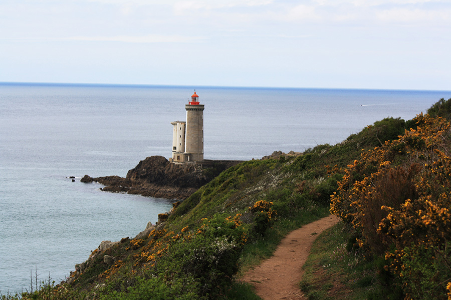 Lézard breton