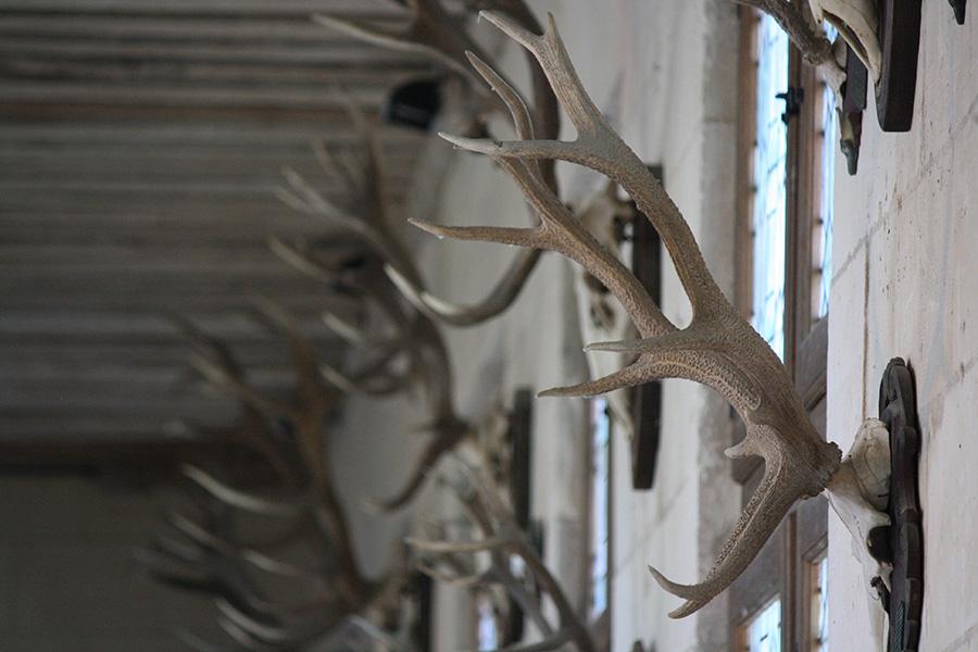 Trophées de chasse de Chambord