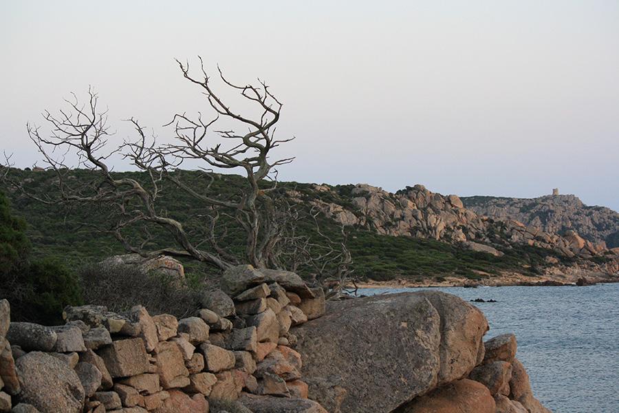 Végétation de la Cala d'Arana