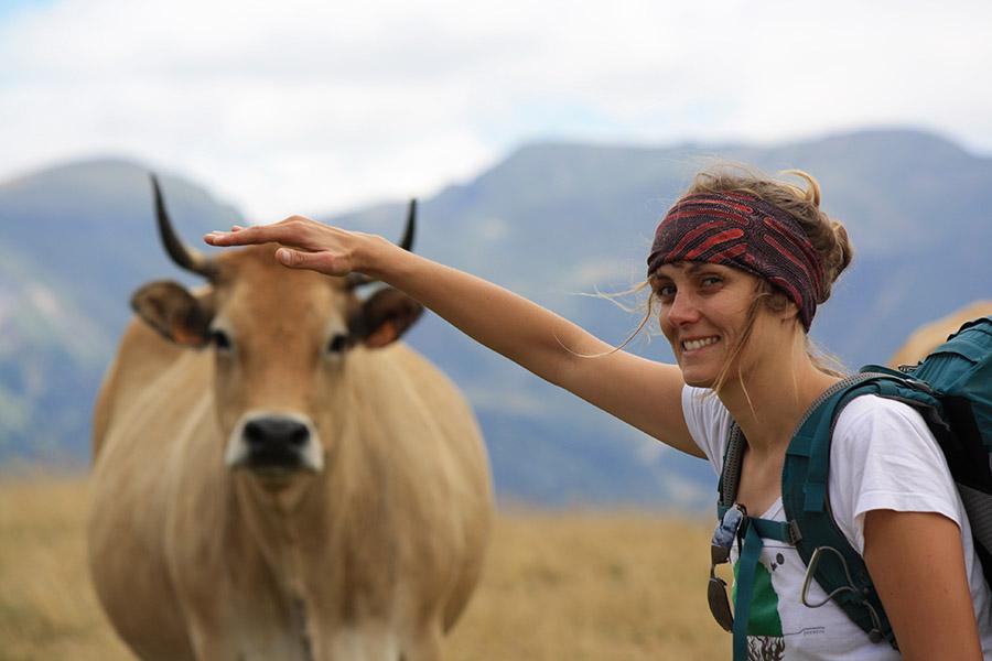 Vaches d'Auvergne