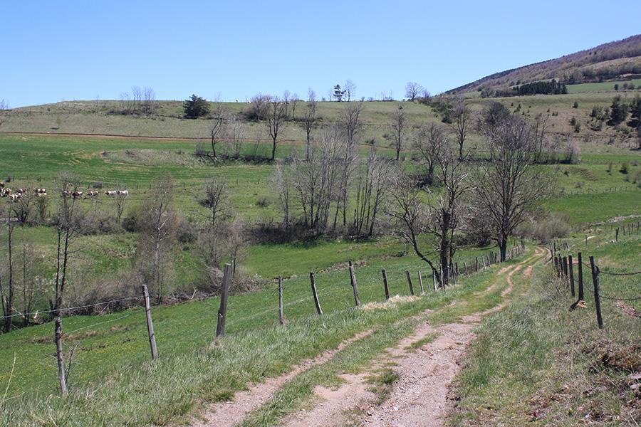 Chemin de pâturage en Lozère