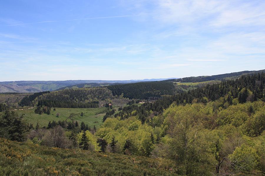 50 nuances de vert dans les forêts de Cévennes