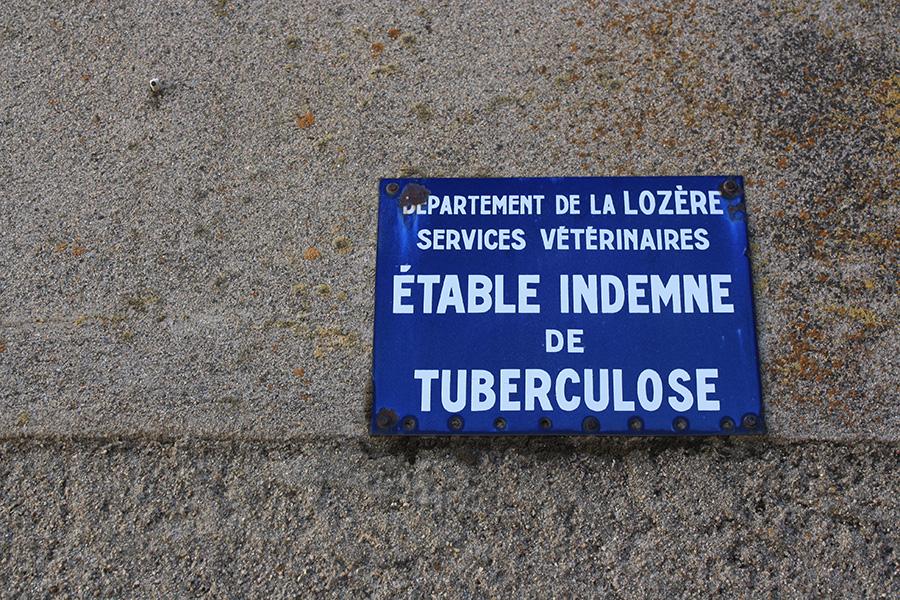 Tuberculose des Cévennes