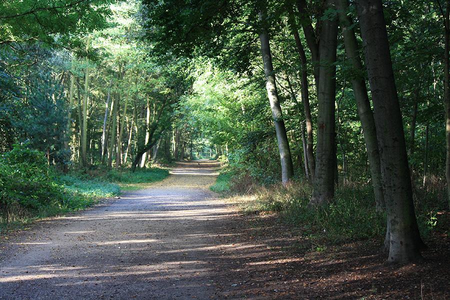 Chemin du bois de boulogne