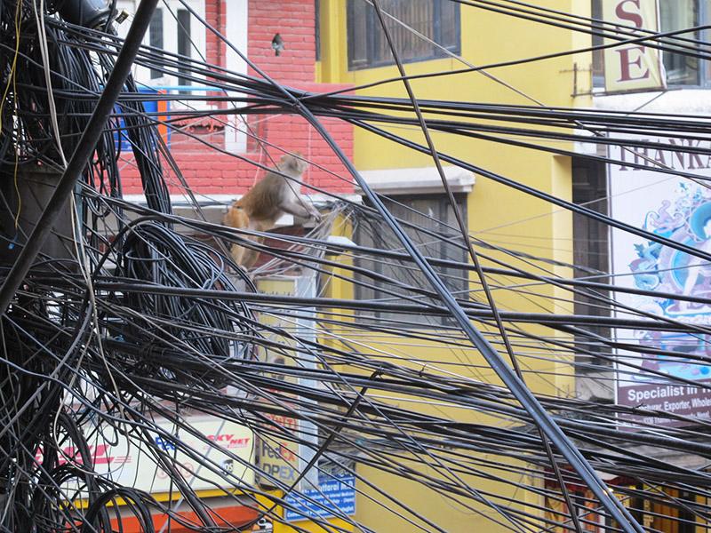 Nepal Katmandou singe cables telephoniques