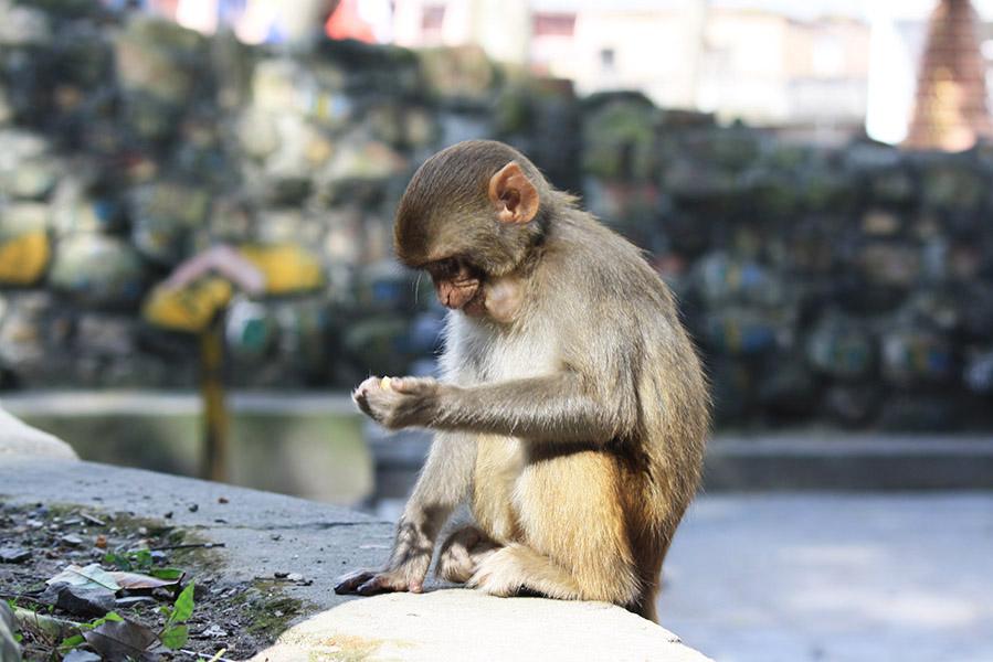 nepal_swayambunath (66)