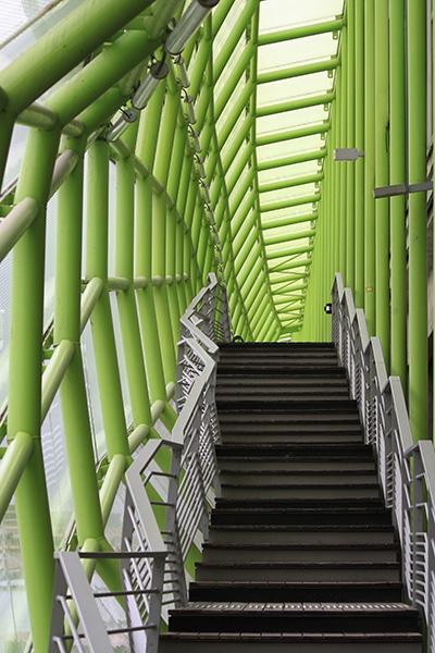 Serpent vert de Paris