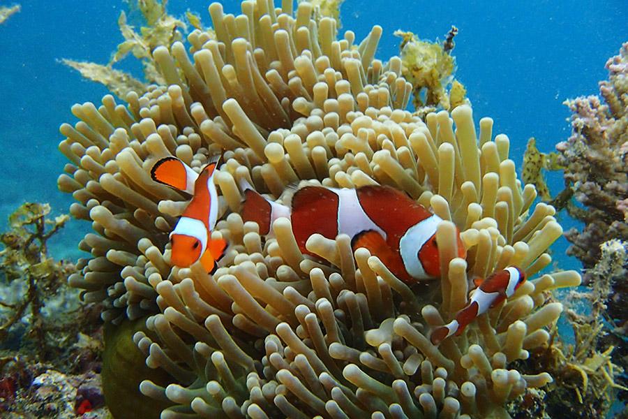 Philippines_PortBarton_Snorkeling_(1)