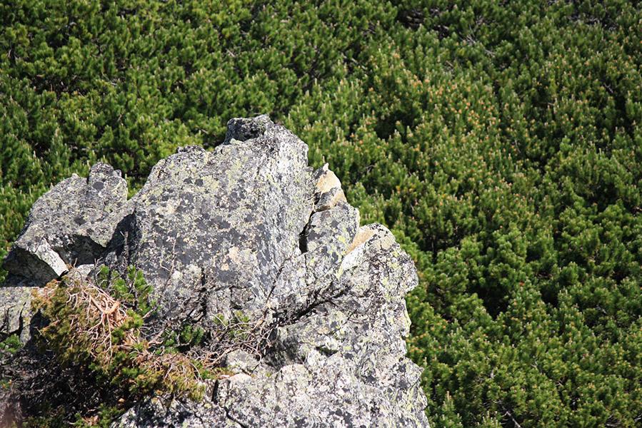 Nature des Haute Tatras